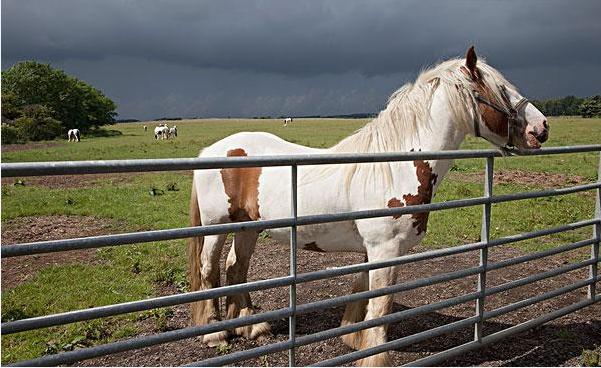 诗歌赏析之栅栏与马